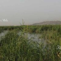 ecosistema_filtro