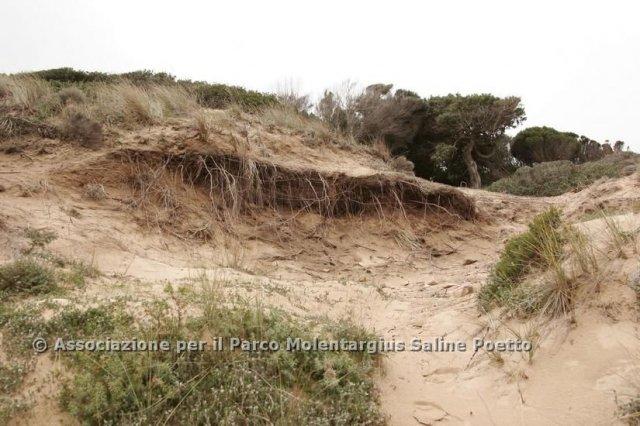 dune_chia_4