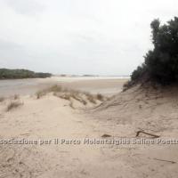 dune_chia