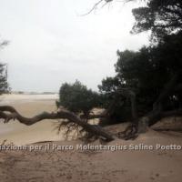 dune_chia_1
