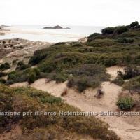 dune_chia_6