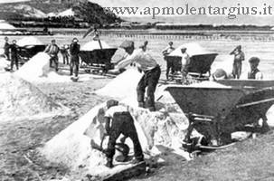 Operai raccoglitori e carrellanti delle Saline di Cagliari