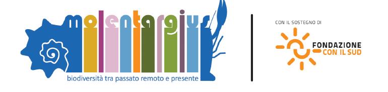 logo Fondaz sud + prog
